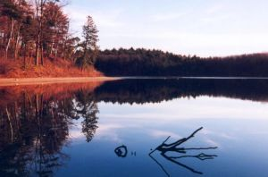 Walden Pond Thoreau