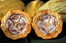 Cocoa Beans in the Cacoa pod