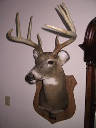 Mounted Deer Head on Wall
