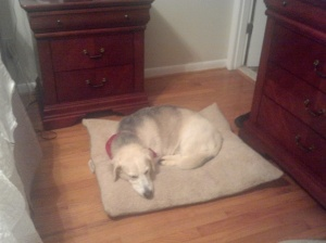 Husky Basset Hound Mix, Dog Bed