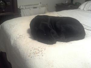 Dog, Dog on bed