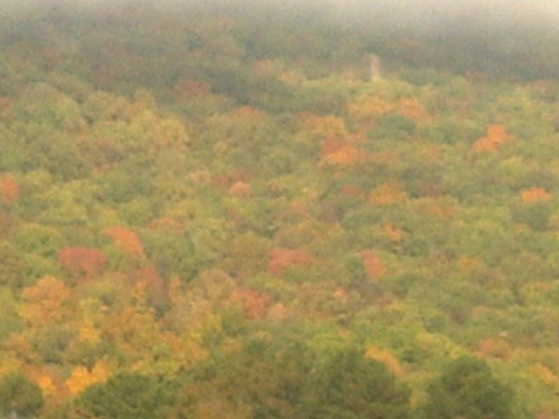Fall leaves mountain