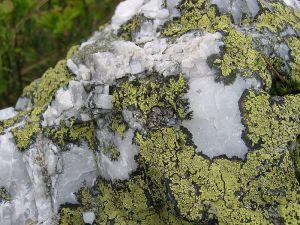 Lichen, Rock, Map Lichen, Arctic