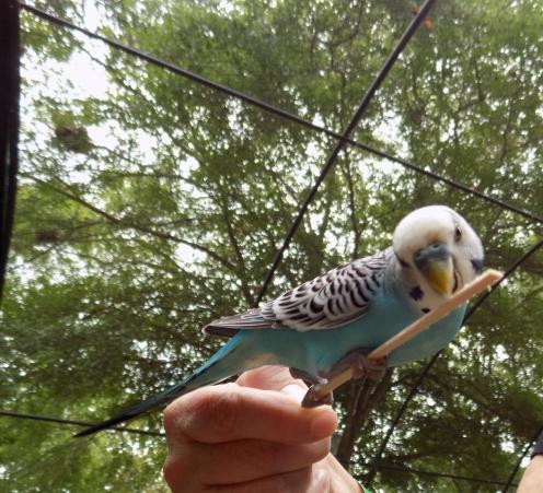 Feeding the Parakeets